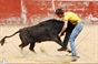 Amadores de Beja treinam na ganadaria Pereda