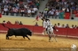 As imagens do  58º Concurso de Ganadarias de Évora
