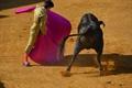 Fotos da Alternativa de Nuno Casquinha