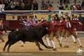 Fotos da Tourada Real em Vila Franca de Xira