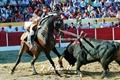 As melhores imagens do toureio a cavalo por José Foles