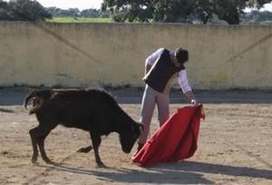 Mário Coelho (filho) com novas oportunidades de tourear no México