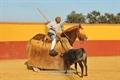 Imagens da tenta de Nuno Casquinha na ganadaria de Rio Grande de D.Rufino Calero, em Badajoz .