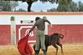 Imagens da tenta na ganadaria Pinto Barreiros