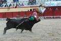 Imagens do 1º ciclo nacional de novilhadas das escolas de toureio