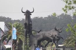 Tiago Pamplona destaca-se na Corrida Mista das Sanjoaninas