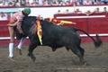 Imagens Taurodromo.com da Corrida Mista das Sanjoaninas