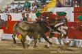 Imagens Feira de Alcochete - I Ciclo Nacional de Novilhadas, 10 de Agosto de 2012