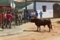 Imagens dos Festejos Populares em Assumar (Monforte)