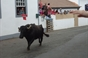 Tourada à Corda da Canada de Belém, na Ilha Terceira