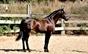 João Ribeiro Telles tem 3 novos cavalos