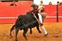 Imagens do festival taurino na Granja