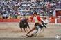 As imagens da aparatosa colhida do cavaleiro  Tiago Carreiras