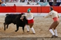 Imagens do XXXI concurso de ganaderias em Alcochete