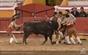 As imagens do festival taurino do Cartaxo