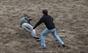 Avaliação de Vacas Rego Botelho na Quinta do Malhinha - Ilha Terceira