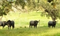 Os Vale Sorraia para 6 de maio em Vila Franca de Xira